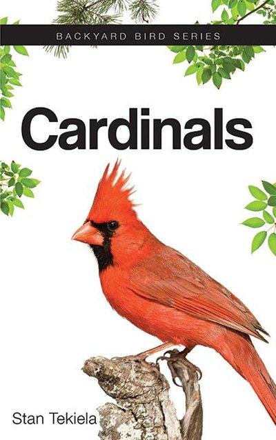 CARDINALS - BACKYARD BIRD SERIES